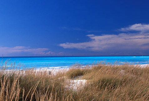 Spiaggia del Calambrone